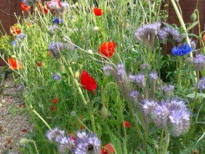 Wild flower bed