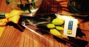 daffodils crop